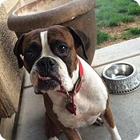 Adopt A Pet :: Holland - Phoenix, AZ