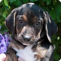 Adopt A Pet :: Finch - Garfield Heights, OH