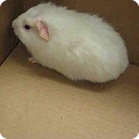 Adopt A Pet :: A037002 - Norco, CA