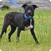 Adopt A Pet :: Brandy - Lebanon, MO