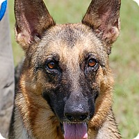 Adopt A Pet :: Sheila AD 08-27-16 - Preston, CT