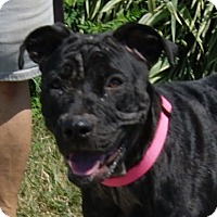 Adopt A Pet :: Her - Monroe, MI