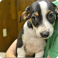 Adopt A Pet :: Gunner - Tavares, FL