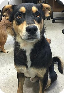 Shepherd (Unknown Type) Dog for adoption in Morehead, Kentucky - Nemo