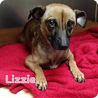 Chihuahua/Jack Russell Terrier Mix Dog for adoption in Kamloops, British Columbia - Lizzie