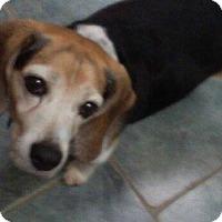 Adopt A Pet :: Wyatt - cicero, NY