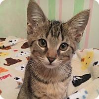 Adopt A Pet :: Peanut - Lombard, IL