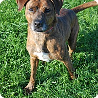 Adopt A Pet :: Duke - Berea, OH