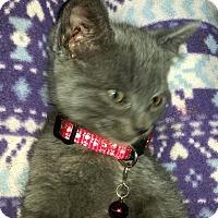Adopt A Pet :: GRAYSON - Winterville, NC