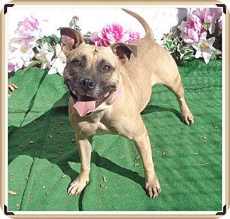 Shepherd (Unknown Type) Mix Dog for adoption in Marietta, Georgia - ROXY (R)