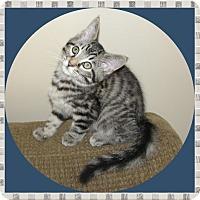 Adopt A Pet :: Lukey - Mt. Prospect, IL