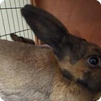 Adopt A Pet :: Doe #160820 - Apple Valley, CA