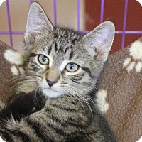 Adopt A Pet :: Lion-O - Waverly, NY