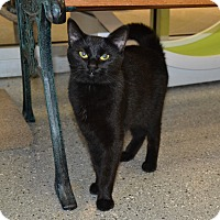 Adopt A Pet :: Sophie - Michigan City, IN