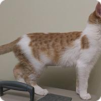 Adopt A Pet :: Parfait - Bedford, VA