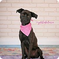 Adopt A Pet :: Kala 3180 - Toronto, ON