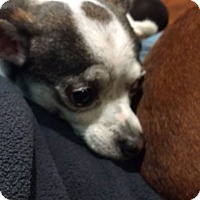 Adopt A Pet :: Gomez - lavon, TX