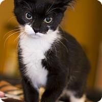 Adopt A Pet :: A..  Darrel - Mooresville, NC