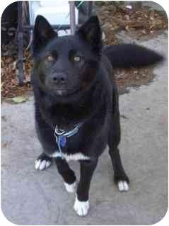 Kahina | Adopted Dog | Kahina | Burbank, CA | Border ...