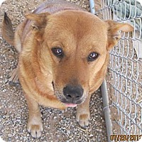 Shepherd (Unknown Type)/Spitz (Unknown Type, Medium) Mix Dog for adoption in Littlerock, California - Gigi