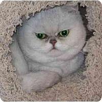Adopt A Pet :: Juneau - Davis, CA