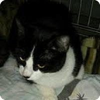 Adopt A Pet :: Irene - Modesto, CA