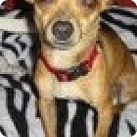 Adopt A Pet :: Dobie - Justin, TX