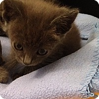 Adopt A Pet :: Delfina - Santa Monica, CA