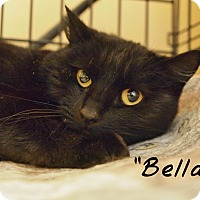 Adopt A Pet :: Bella - Ocean City, NJ