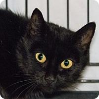 Adopt A Pet :: Foxi - Calgary, AB