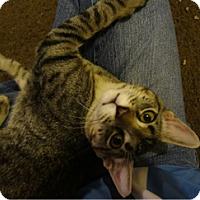 Adopt A Pet :: M'aiq - Arlington/Ft Worth, TX