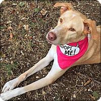 Adopt A Pet :: Angel - Johnson City, TX