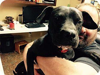 Labrador Retriever Mix Dog for adoption in Murfreesboro, Tennessee - Annabelle