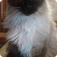 Adopt A Pet :: Alucard - Ennis, TX
