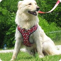 Adopt A Pet :: Kimme - Kyle, TX