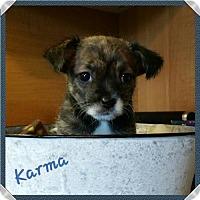 Adopt A Pet :: Karma - Arcadia, FL
