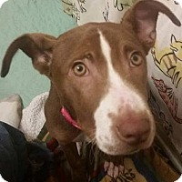Adopt A Pet :: Mocha - Evensville, TN