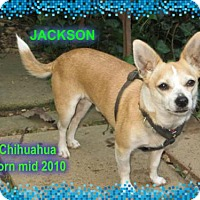 Adopt A Pet :: Jackson - Huddleston, VA