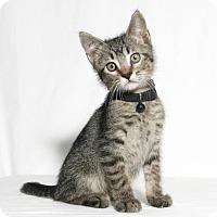 Adopt A Pet :: Scuttle - Lufkin, TX