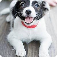Adopt A Pet :: Rose - Modesto, CA