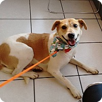 Adopt A Pet :: Sophia - San Diego, CA