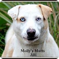 Adopt A Pet :: Jilli - Dixon, KY