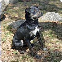 Adopt A Pet :: Cody - Mountain Center, CA