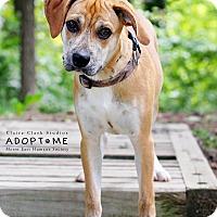 Adopt A Pet :: Maverick - Edwardsville, IL