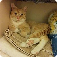 Adopt A Pet :: Professor Snugglebottoms - Baltimore, MD