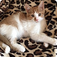 Adopt A Pet :: Penny - Whitehall, PA