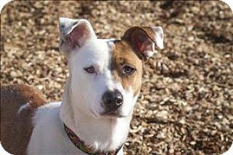 Border Collie Mix Dog for adoption in Napa, California - Pepper