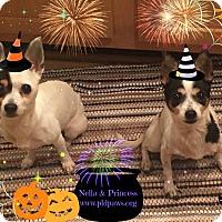 Adopt A Pet :: Princess - Essington, PA