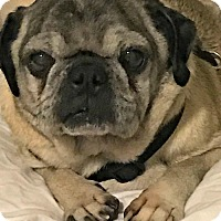 Adopt A Pet :: Jordan - Grapevine, TX