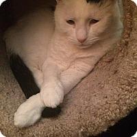 Adopt A Pet :: Riley - Manhattan, KS